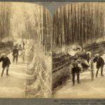 UNDERWOOD & UNDERWOOD PUBLISHERS NEW YORK SOTTO GLI ALBERI DI BAMBOO GUARDANDO ATTRAVERSO LA FAMOSA STRADA NEI PRESSI DI KIYOMIZU A KYOTO, Kyoto, 1904